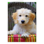Golden Doodle Puppy Greeting Cards