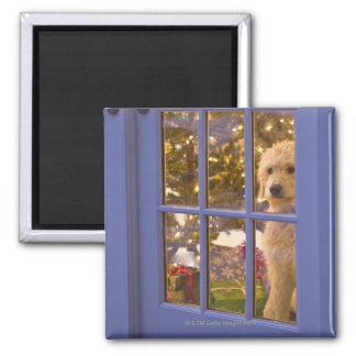 Golden Doodle puppy looking out glass door with Magnet