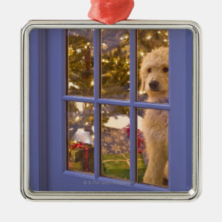 Golden Doodle puppy looking out glass door with Christmas Ornament