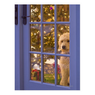 Golden Doodle puppy looking out glass door with Postcard