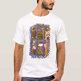 Golden Doodle puppy looking out glass door with T-Shirt