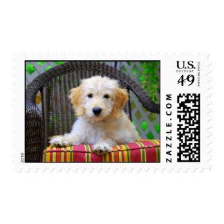 Golden Doodle Puppy Stamps