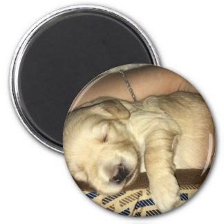 Golden Doodle Puppy Sleeping Magnet