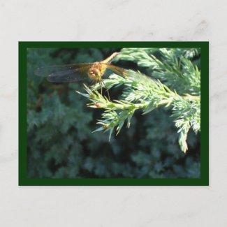 Golden Dragonfly at Harrison Lake Postcards
