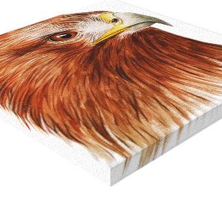 Golden Eagle 2011 Canvas Print