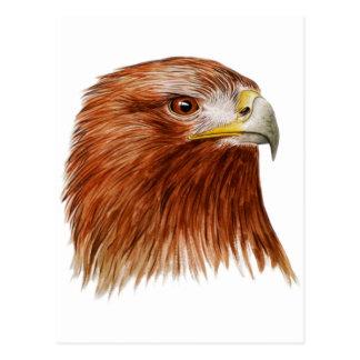 Golden Eagle 2011 Postcard
