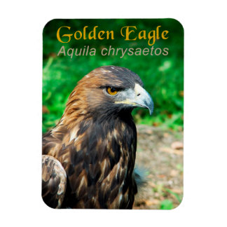 Golden Eagle (Aquila chrysaetos) Magnet