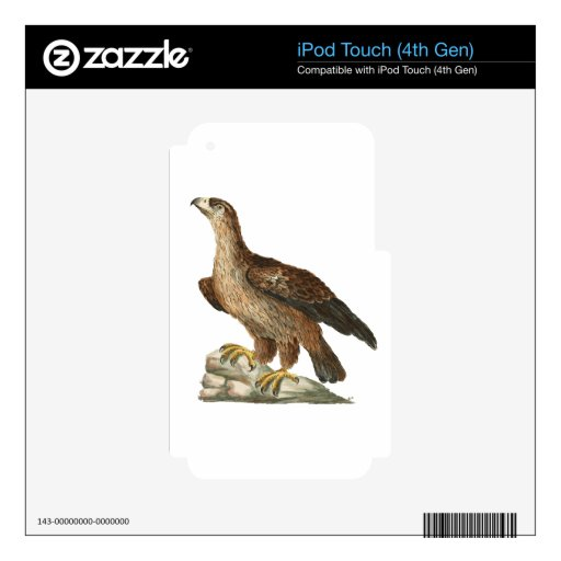 Golden Eagle - Aquila chrysaetos iPod Touch 4G Decals