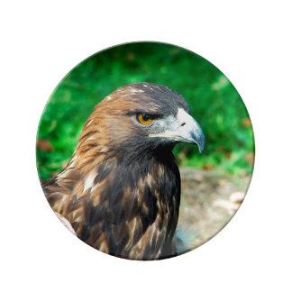 Golden Eagle Close Up Porcelain Plate