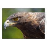 Golden Eagle closeup Card