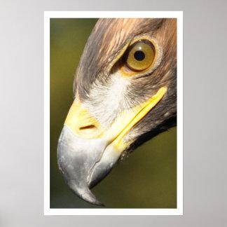 Golden Eagle Face Poster