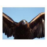 Golden Eagle Flight Postcard