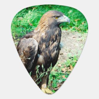 Golden Eagle Guitar Pick