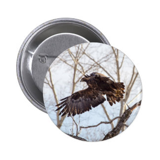 Golden Eagle in Flight Pin
