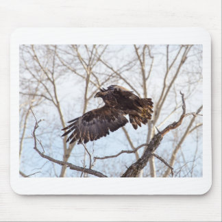 Golden Eagle in Flight Mouse Pad