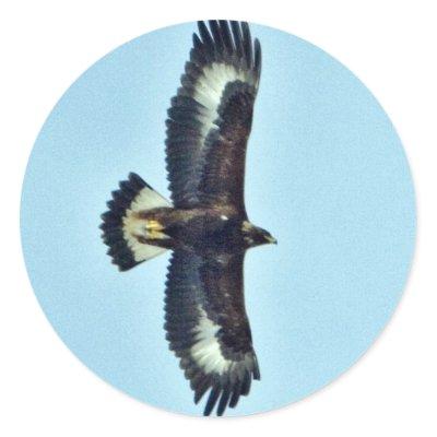 golden eagle in flight. Golden Eagle in Flight Sticker