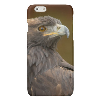 Golden Eagle looking over shoulder Glossy iPhone 6 Case