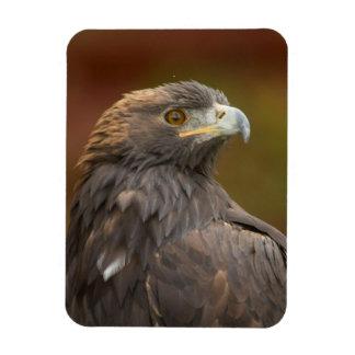 Golden Eagle looking over shoulder Magnet
