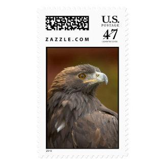 Golden Eagle looking over shoulder Postage