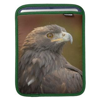 Golden Eagle looking over shoulder Sleeve For iPads