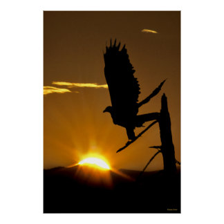 Golden Eagle - Northern CA  - Sierra Nevadas Poster