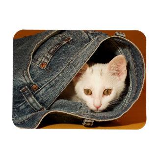 Golden-Eyed Kitty Magnet