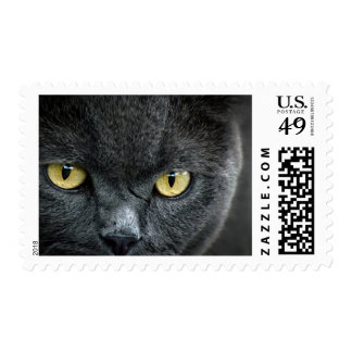 Golden Eyes Hunting Cat Stamp