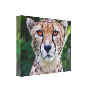 Golden Eyes Wrapped Canvas