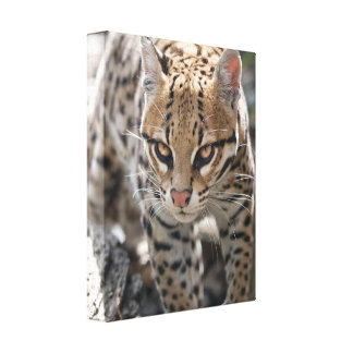 Golden Eyes Wrapped Canvas Print