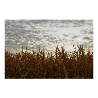 Golden field at sunset posters