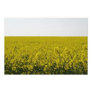 Golden Field Photo Print