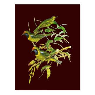 Golden-fronted Leafbird Postcard