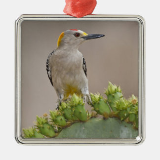 Golden-fronted Woodpecker adult male perched Metal Ornament