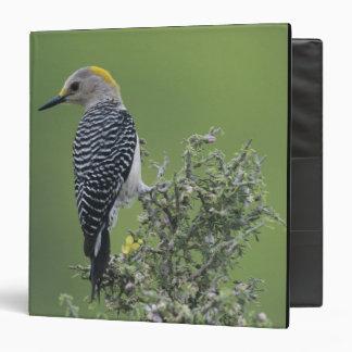 Golden-fronted Woodpecker, Melanerpes 2 3 Ring Binder