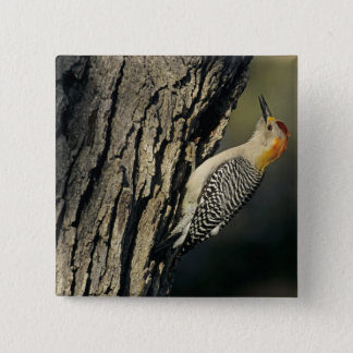 Golden-fronted Woodpecker, Melanerpes Pinback Button