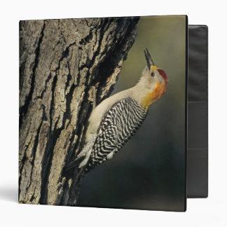 Golden-fronted Woodpecker, Melanerpes Vinyl Binder