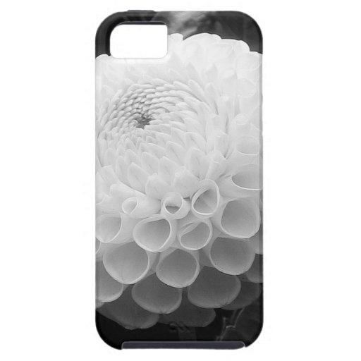 Golden Gate Park Dahlias - iPhone 5 Case