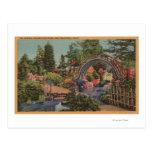 Golden Gate ParkTea Garden- San Francisco, CA Postcard