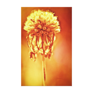 Golden Glow, foral print Gallery Wrapped Canvas