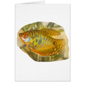 Golden Gourami Side View Saturated Aquarium Fish Card