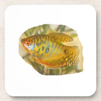 Golden Gourami Side View Saturated Aquarium Fish Drink Coaster