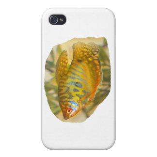 Golden Gourami Side View Saturated Aquarium Fish iPhone 4 Cover