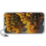 Golden Grapes Mini Speakers