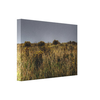 Golden Grasses Gallery Wrapped Canvas