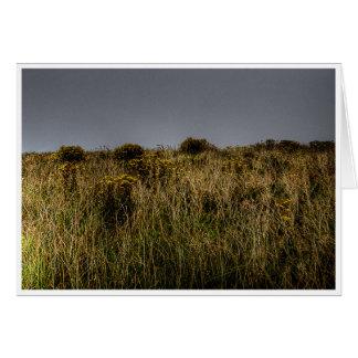 Golden Grasses Greeting Cards