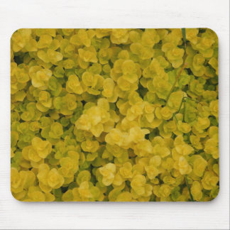 Golden Groundcover Mouse Pad