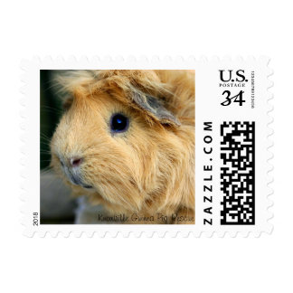 Golden Guinea Pig Stamps