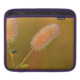 Golden haresfoot clover or Trifolium arvense iPad Sleeves
