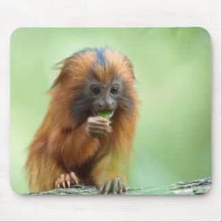 Golden Head Youngster Mouse Pad