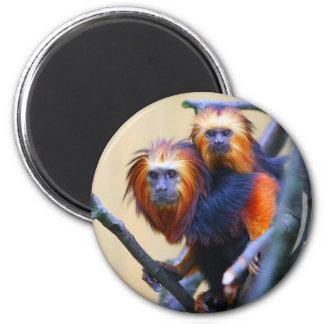 Golden Headed Lion Tamarin Magnet